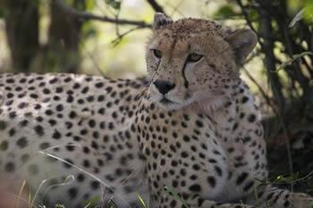 8 days Road Safari Adventure