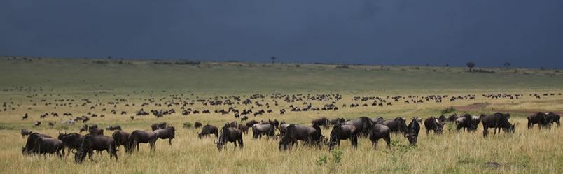 mara_migration-safaris